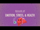 Emotion Stress and Health Crash Course Psychology 26