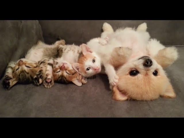 Смешные, милые, симпатичные котята и щенки