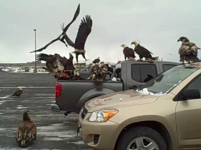 Гульки на Аляске, или никогда не оставляйте рыбу в машине
