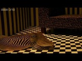 Can Cuttlefish camouflage in a living room - Richard Hammond's Miracles of Nature - BBC One