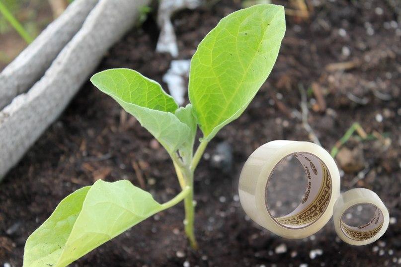 Пять простых способов защиты растений от муравьев и тли