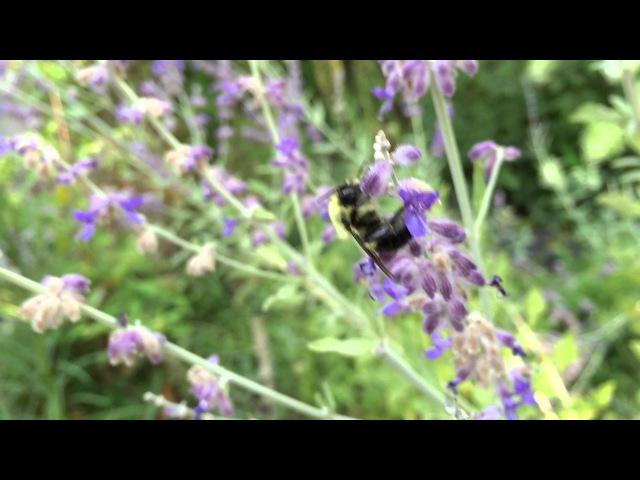 Nice Flower Bumblebee, High Five!