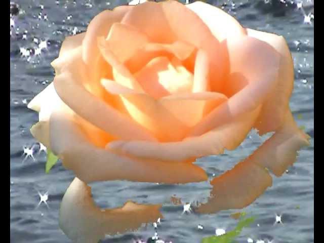 Розы (Альбиони. Адажио. Поет Лара Фабиан)