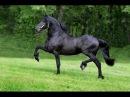 Все породы лошадей Более 210 пород лошадей