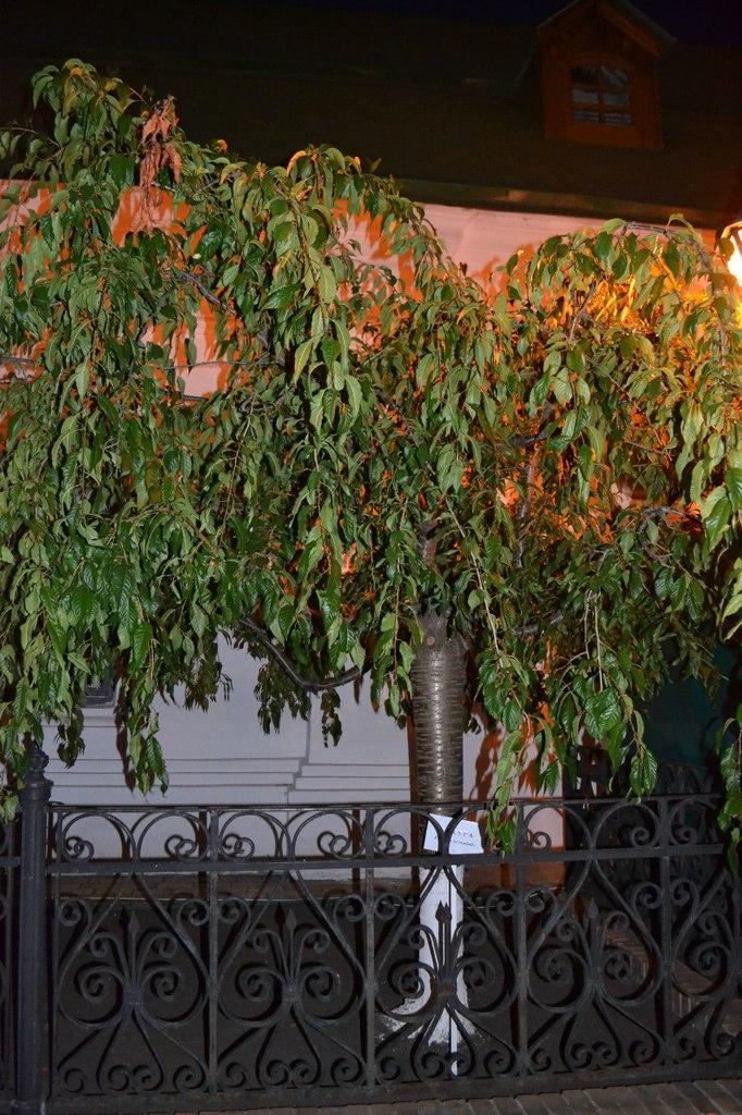 Киев. Печерск. 25.08.15 г. Елена Руденко (130 фото) J9Fadzk0ND4