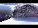 Морской котик разговаривает / Crybaby Learns to Swim