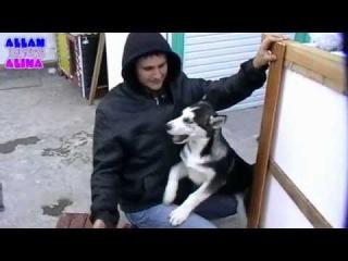 Будка для сибирской хаски / Dog house Husky 4-я часть