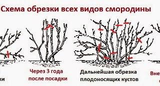 Как правильно сажать ежевику весной 47