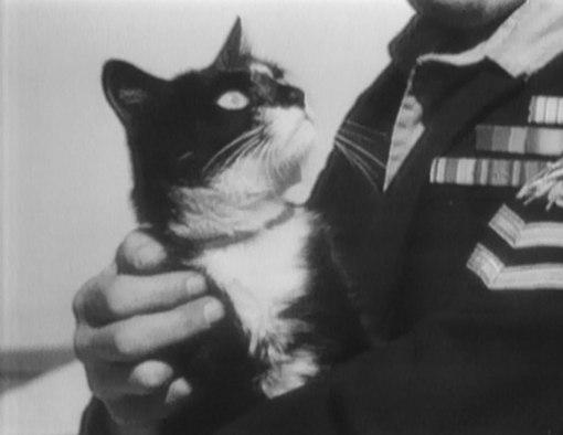 «Непотопляемый» Кот Сэм