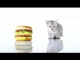 Реклама Биг Мак - Анна Хилькевич _ Мачо и котик