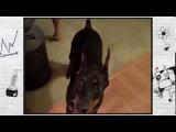 О чем думают собаки: пес собирается на дачу