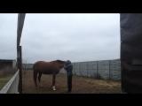 Видео урок по мягкому воспитанию лошадей. Выгоняем лошадь из пространства, как и главное зачем.