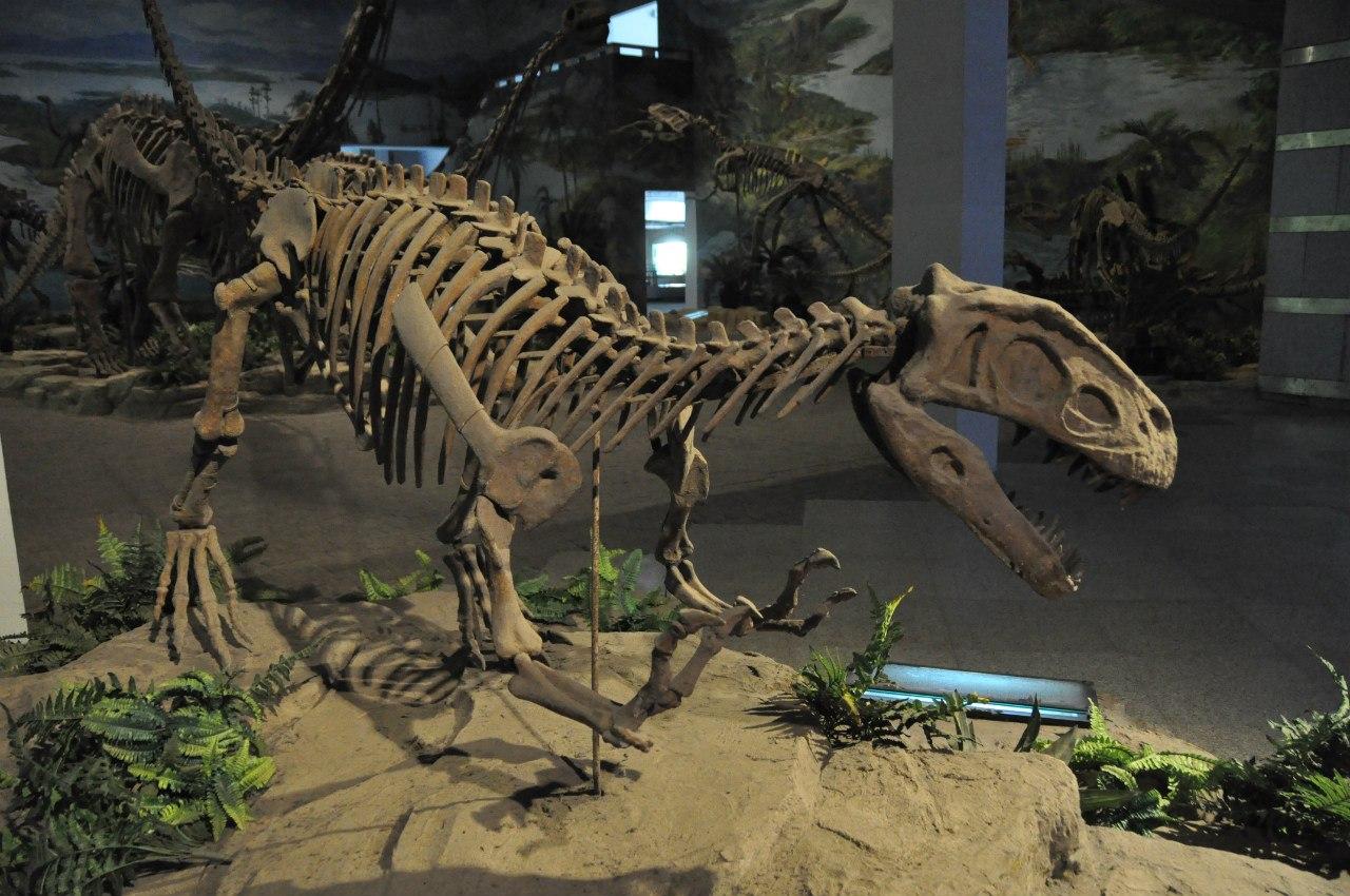 Музей динозавров Зигонга