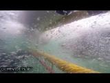 Белая акула напала на клетку с дайверами в воде