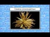 Двудольные, семейство Астровые | урок 60, биология 6 класс