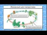 Способы размножения растений | урок 47, биология 6 класс