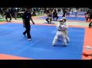 5й чемпионат мира по каратэ киокушинкай г Токио