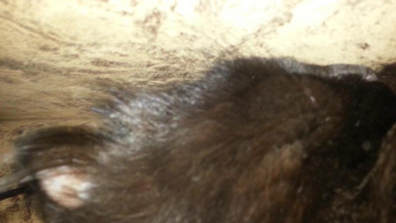 коротко о том как спит мой кот