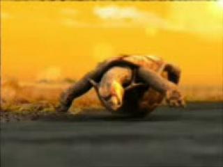 Черепаха Галым-1