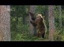 Самые красивые животные севера нашей планеты