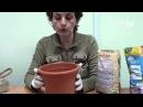 Как выращивать каллы. Сайт Садовый мир