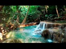 Rainforest Sounds - Water Sound Nature Meditation