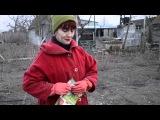 Посадка яблони | planting apple trees