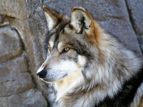 Волк в славянской культуре