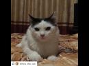 "Nurlan Batyrov on Instagram: ""Новый Вайн от @dinca_the_cat😂😂😂 ・・・ Санжар насмотрелся Индийского кино и теперь гонит:3 Sanjar had seen an Indian Bollowood movies and…"""