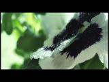 Tiziano Ferro feat. Malú - El amor es una cosa simple