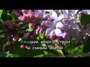 Караоке для детей Бескозырка белая Газманов Р