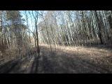коп на лесной дороге
