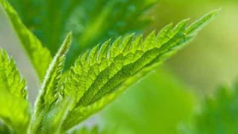 Старинные рецепты здоровья и долголетия.Пища богов » Freewka.com - Смотреть онлайн в хорощем качестве