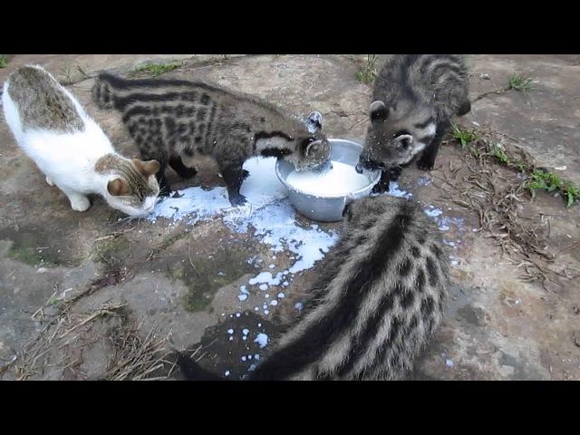 Коты ахуели от такого свинства