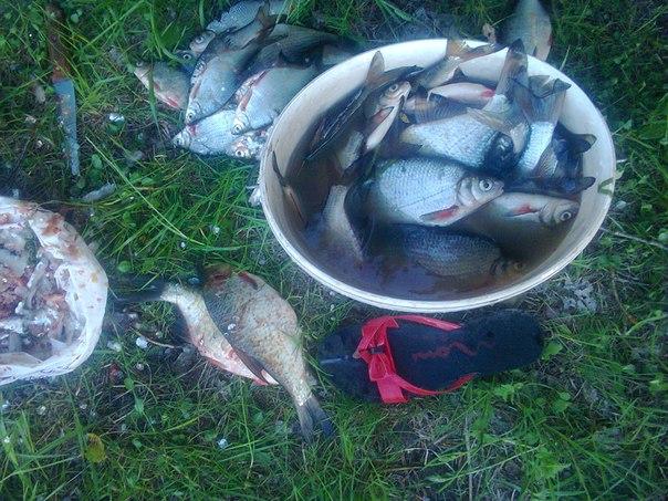 на Десні.Риби валом!