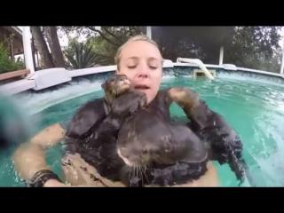 Девушка купается в бассейне в выдрами