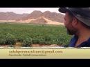 Пермакультура в пустыне Вади Рам в Иордании.