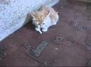 Кот с сигаретой , котёнок не отдаёт сигарету , жадный кот, животные приколы