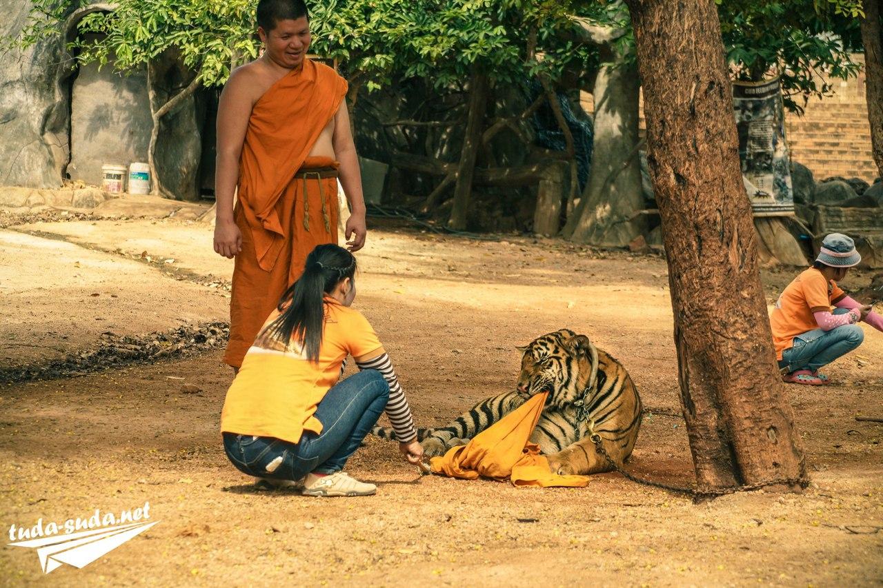 Тигриный храм в Таиланде