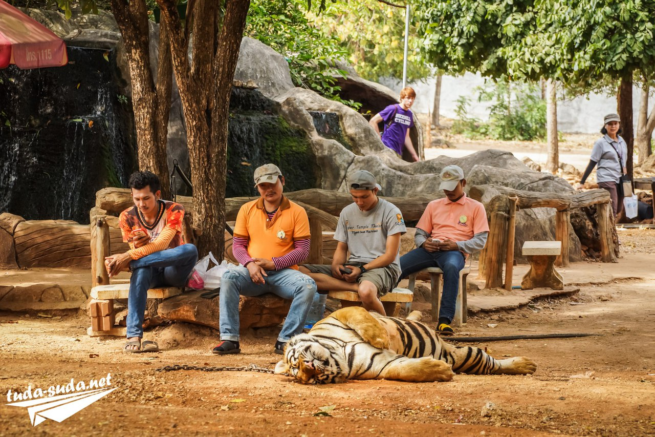 монастырь с тиграми в Таиланде