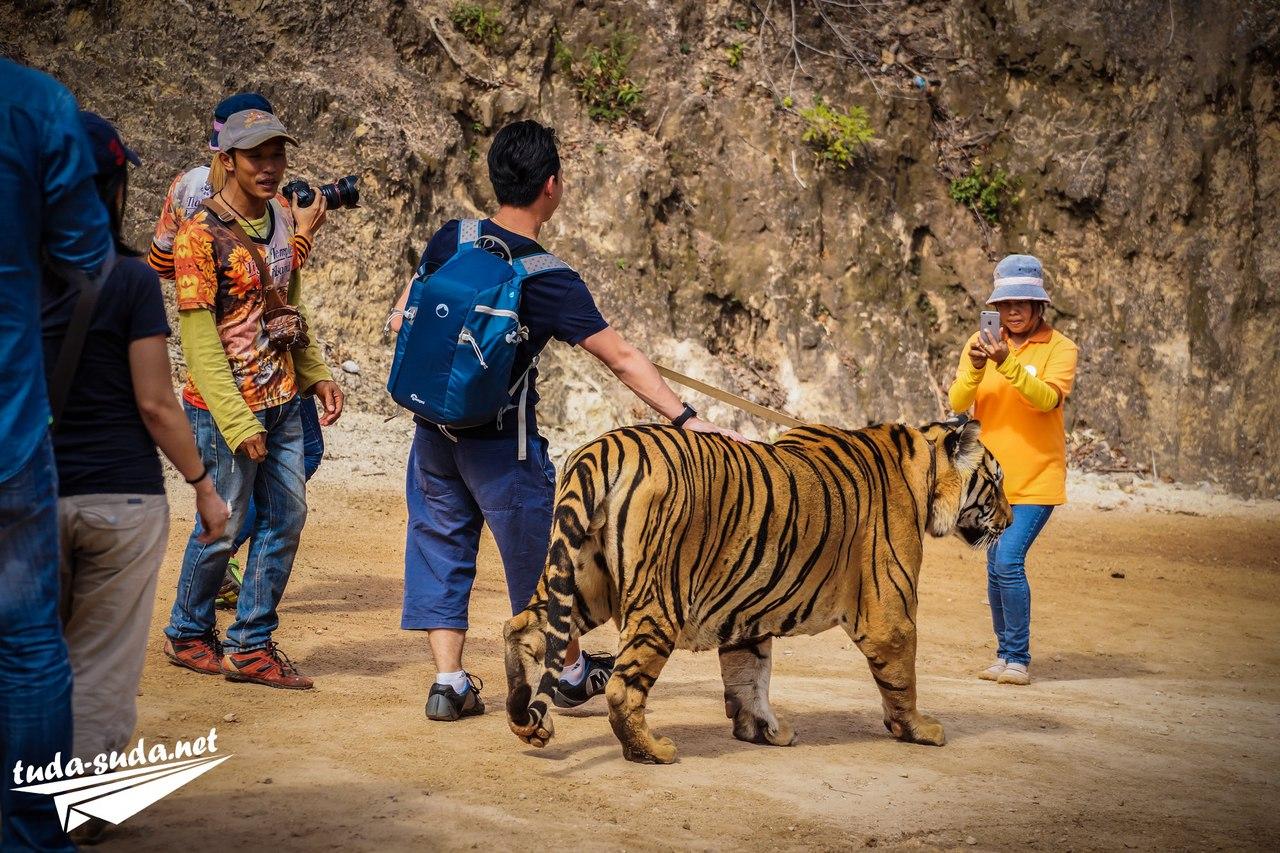 Экскурсия тигры Таиланд