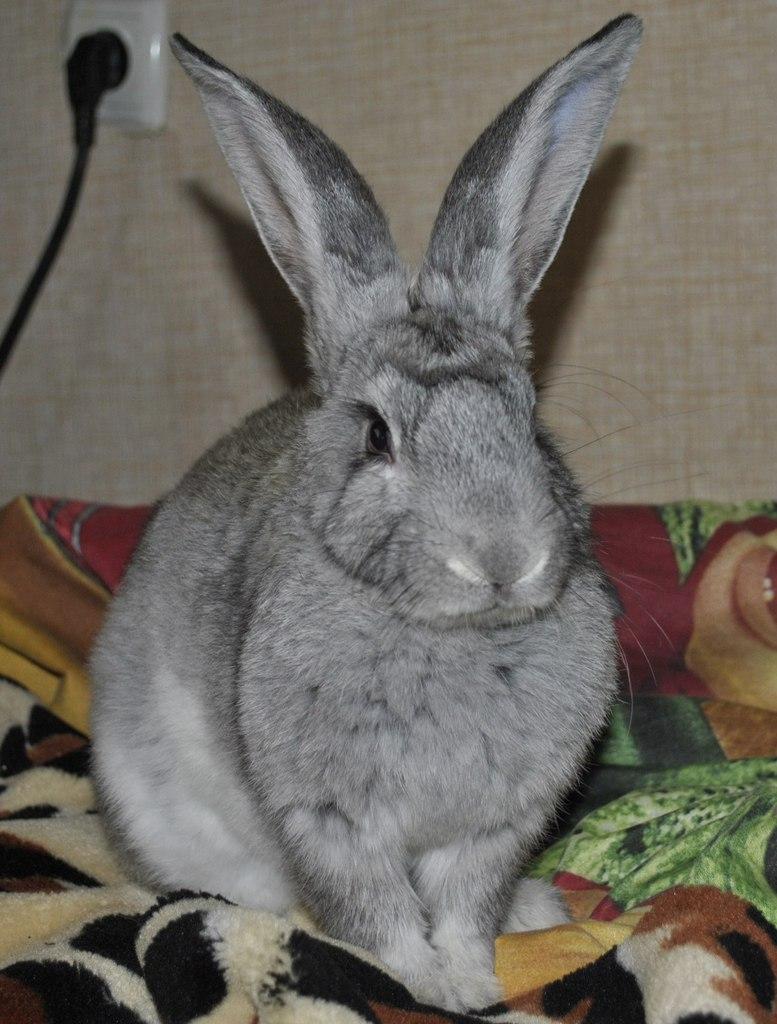 кролик или заяц?