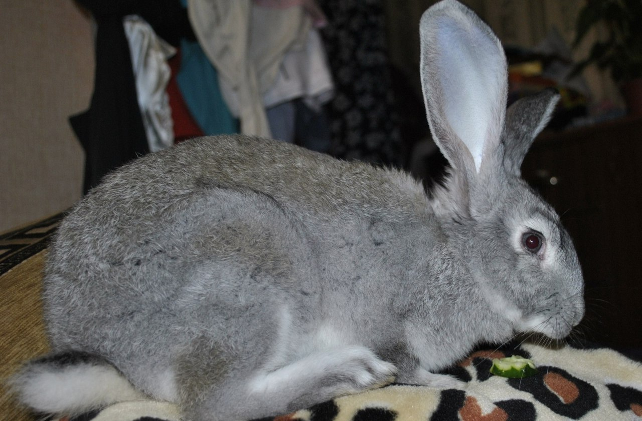 Это кролик или заяц?