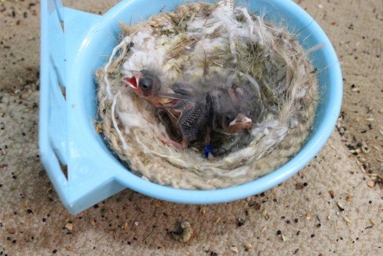 Фотографии моих птиц  - Страница 2 AlqL2z4yt1w