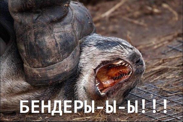 Причиной отставки Пивоварского станет Саакашвили, – эксперт - Цензор.НЕТ 983