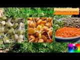Пророщенные зерна чем полезны