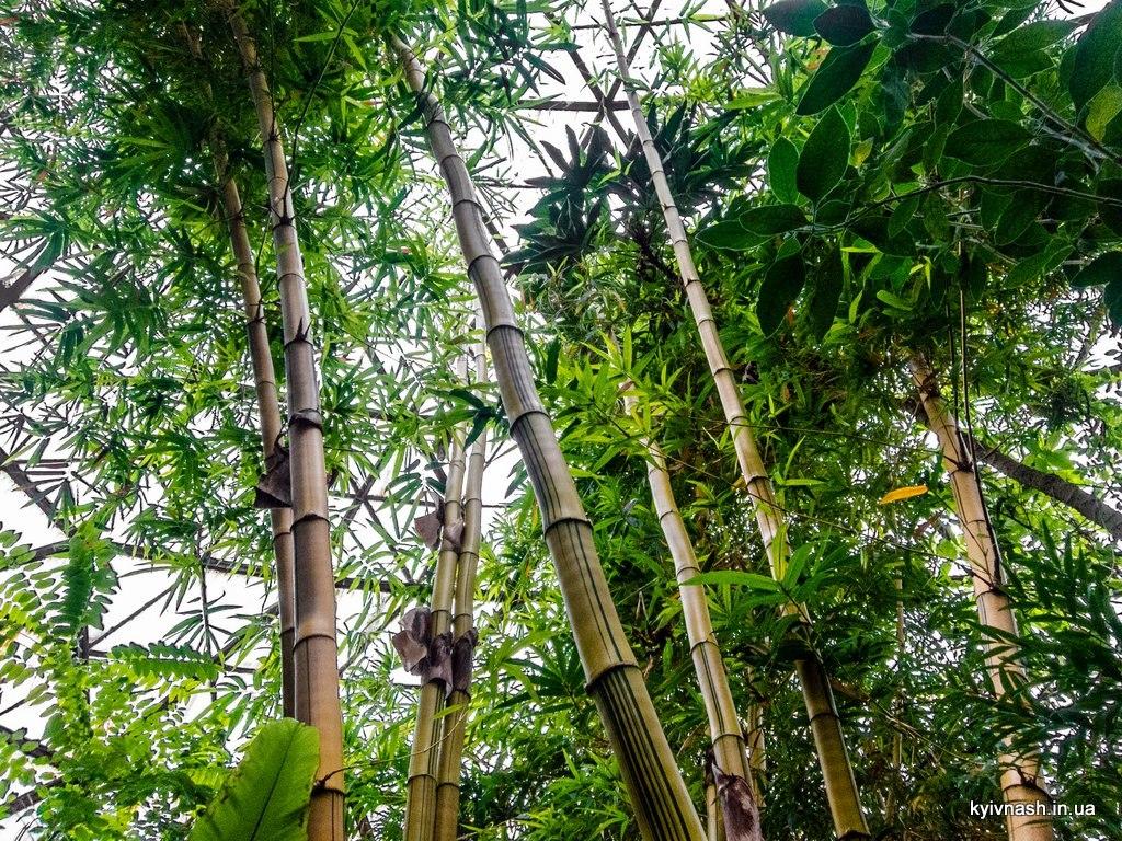 киев ботанический сад имени фомина фото