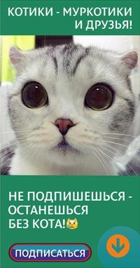 Коты смешные открытки