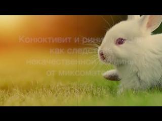 Конюктивит и ринит у кролика как результат от использования некачественной вакцины от миксоматоза