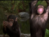 "Фильм ""Книга джунглей  История Маугли  The Jungle Book  Mowgli"
